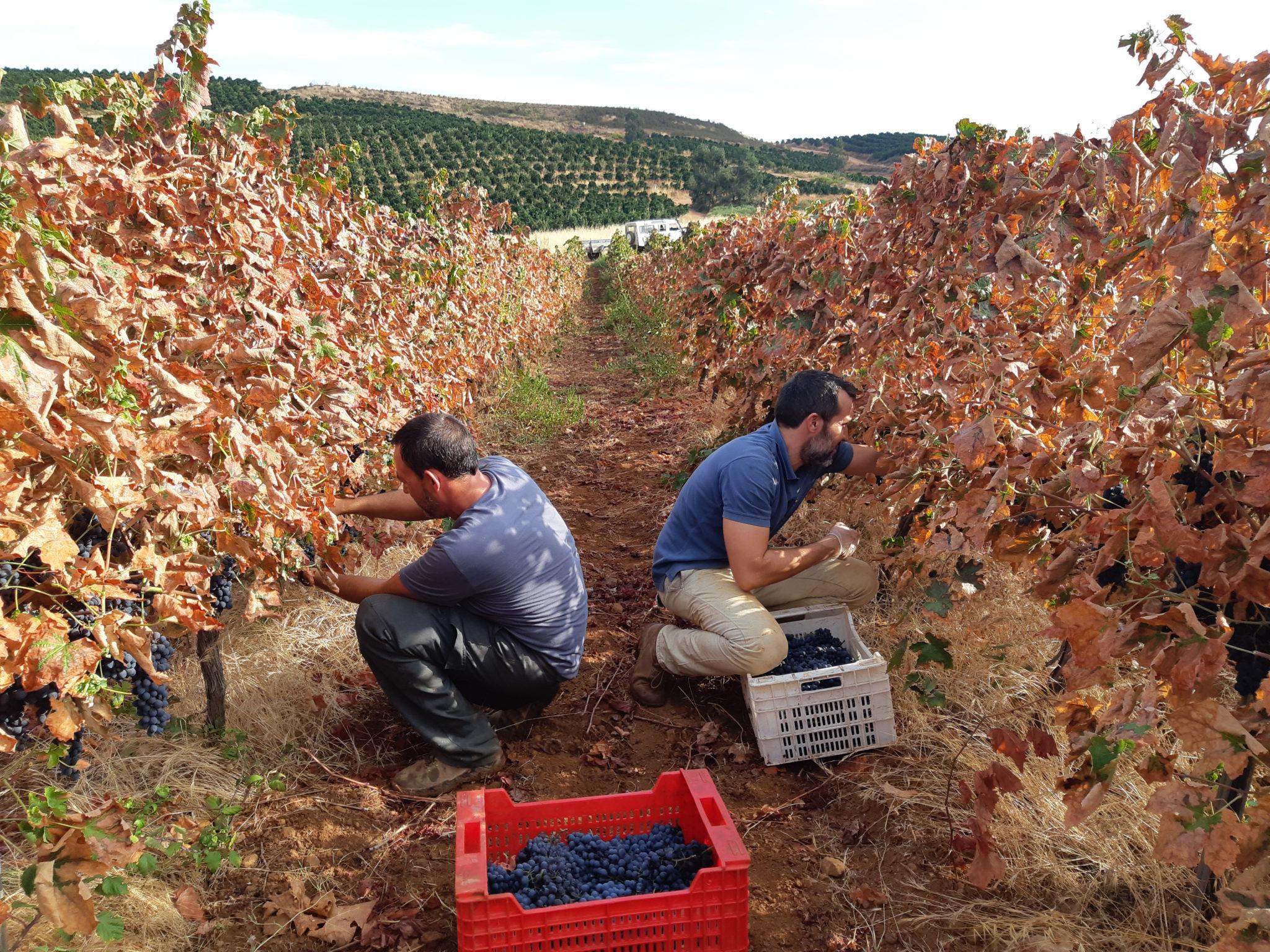 "Vinos Ecológicos, Certificados ""Agricultura Ecológica!"